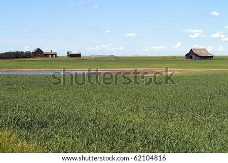 Abandoned farmstead in corn field - stock photo