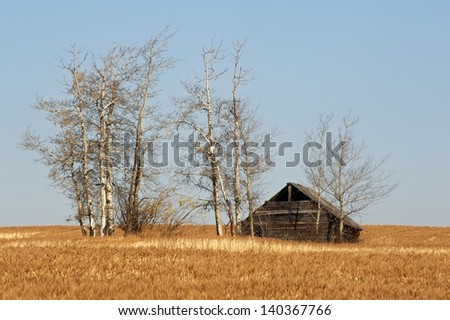 Abandoned house surrounded by aspen trees and dry grass - stock photo