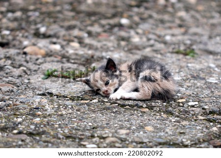 abandoned kitten lying on the ground  - stock photo