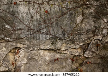 Abandoned old gray wall covered by dry liana branches of wild grape vine organic dull gothic style natural surface outdoors closeup, horizontal picture - stock photo