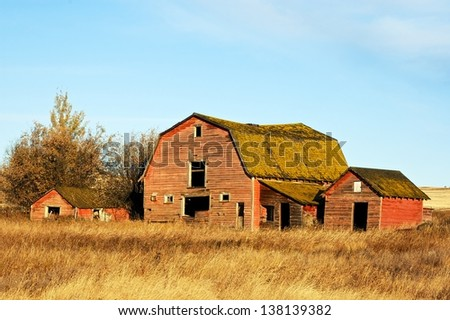 Abandoned red barns in fall - stock photo