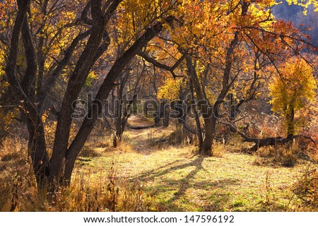 Abandoned trail in autumn forest - stock photo