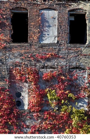 Abandoned warehouse with growing vines. - stock photo