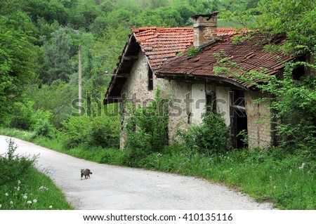 Abandoned watermill and a kitten on the dirt road in the Balkans - stock photo