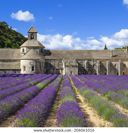 Abbey of Senanque and blooming rows lavender flowers. France. - stock photo