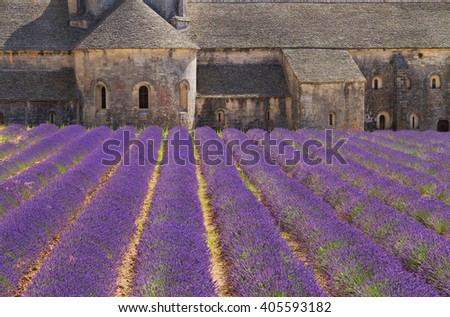 Abbey Senanque and blooming  Lavender field flowers, France - stock photo