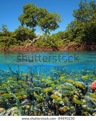 Above and below water surface with mangrove trees and a shoal of tropical fish with corals and sea sponges, Caribbean sea, Panama - stock photo