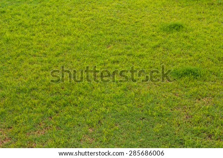 Above background green grass that grows short and dry patches are part of the field. - stock photo