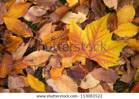 Above view of autumnal yellow leaves on the land - stock photo