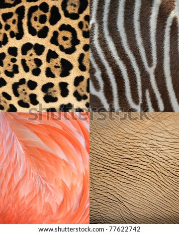 abstract africa animal pattern texture of skin, fur and feathers.. Tiles show elephant skin, leopard fur, flamingo feathers and zebra pattern as background. - stock photo
