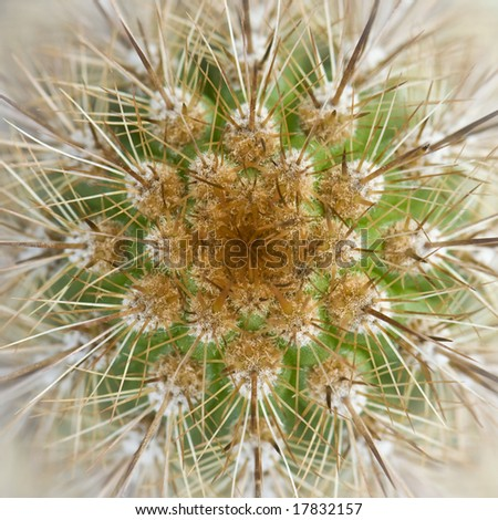 Abstract angle and photo of cactus - stock photo