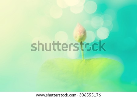 Abstract art photography with lotus flower, Soft focused with lotus flower and blur bokeh background, Nature background with watercolor painting style - stock photo