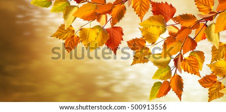 Abstract autumn background with colorful leaves. Indian summer.