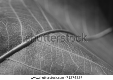 Abstract autumn leaf background