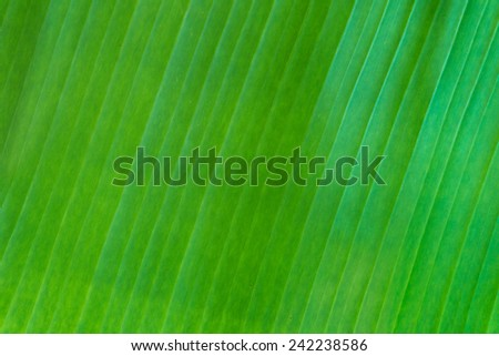 Abstract Background : Banana Leaf Pattern