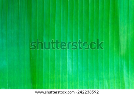 Abstract Background : Banana Leaf Pattern - stock photo