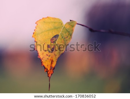 abstract background blurred leaves. Small Depth of Field (DOF)  - stock photo