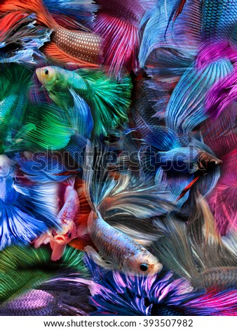 abstract background colorful fighting fish - stock photo