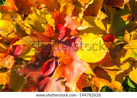 abstract background from autumn leaves on a grass - stock photo