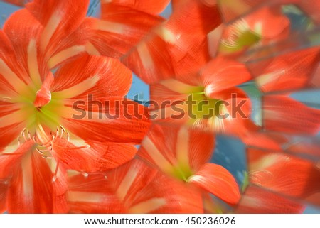 Abstract background from flowers, kaleidoscope effect