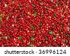 Abstract background from fresh cowberry - stock photo