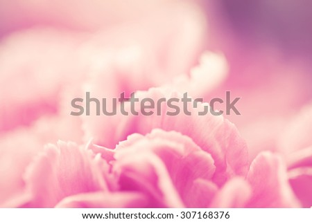 abstract background from selective focus of close up the sweet pink carnation flowers - stock photo