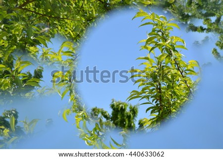 Abstract background, leaves