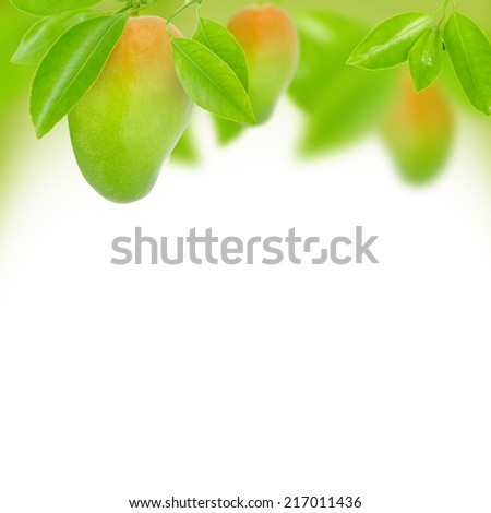 Abstract background made of mango and leaves - stock photo
