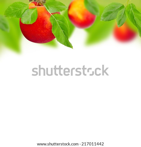 Abstract background made of peaches and leaves - stock photo