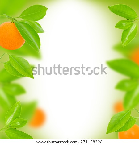 Abstract background made of tangerines and leaves - stock photo