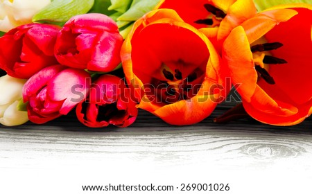 Abstract background made of tulip blooms with white space for text - stock photo