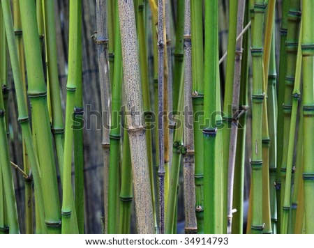 Abstract background of bamboo in butchart gardens, british columbia, canada