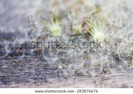 abstract background of dandelions. vintage wood texture