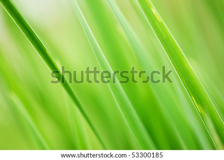 Abstract background of fresh green grass. Extreme close-up, shallow DOF. - stock photo