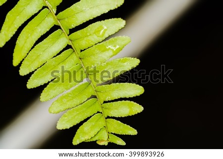 Abstract background of green fern with soft background of black and white. Selective Focus on fern. - stock photo