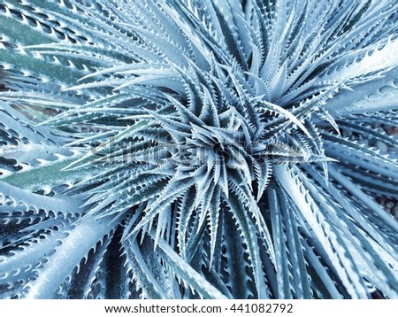 abstract background of landscape of cactus white spikes