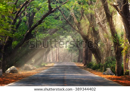 Abstract background of route and journey amidst the big tree and beautiful nature - stock photo