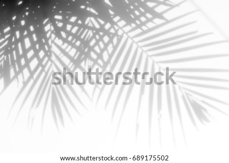 Palm Shadow Stock Images Royalty Free Images Amp Vectors