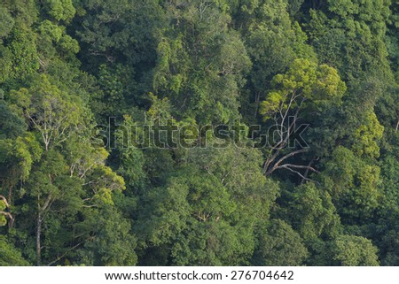 abstract background of tropical forest - stock photo