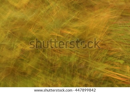 Abstract background of yellow grass.