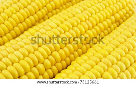 abstract background of yellow maize cobs - stock photo