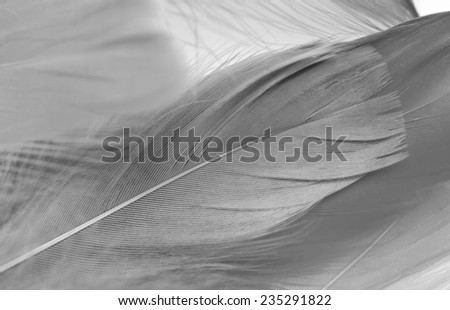 Abstract background texture of colored goose feathers