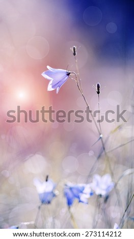 Abstract background with of wild flowers - blue Harebells (Campanulas). - stock photo