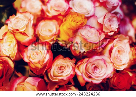 Abstract background with rose flowers. Oil painting stylization. Selective focus. Vintage instagram effect. - stock photo