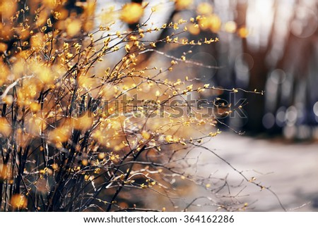 Abstract background with spring branches of bushes. - stock photo