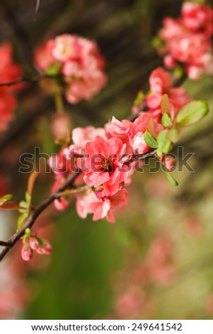Abstract background with vintage flower color Light coral. Blurred background with spring day. Can be used as a wallpaper - stock photo