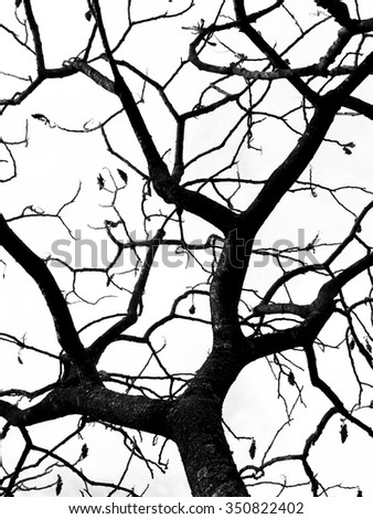 abstract bare trees branches canopy - stock photo