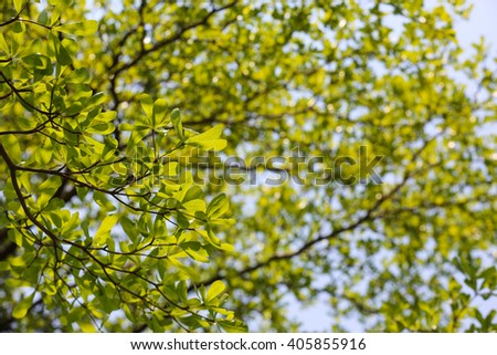 Abstract big green tree with branch magnify - stock photo