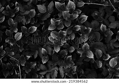 abstract black and white leaves & branch texture - stock photo