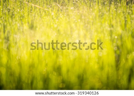 abstract blur background green bokeh of nature - stock photo